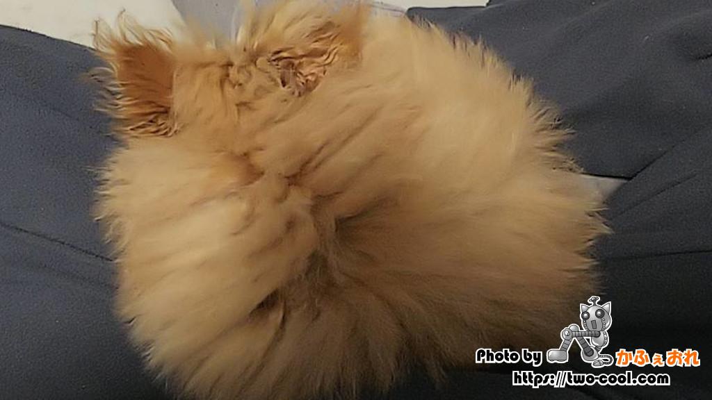 膝の上で寝るモコ